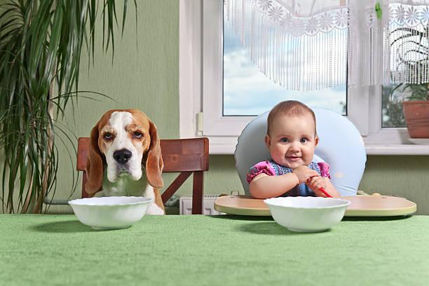 собака и ребенок за столом