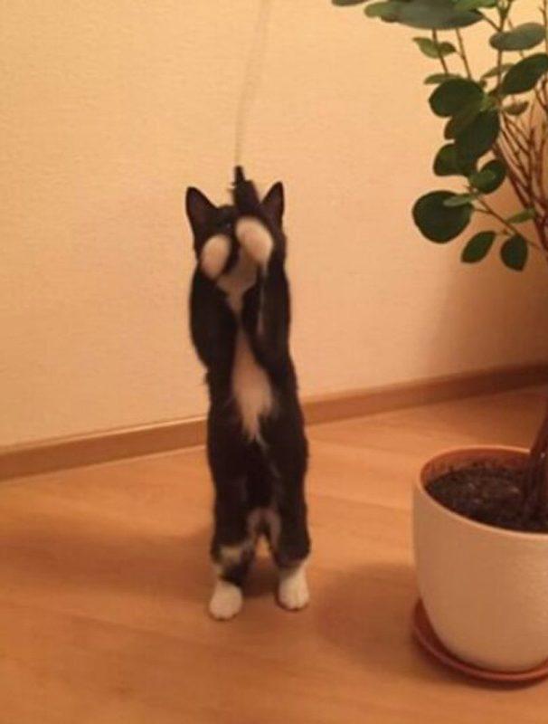 Могут ли бомжи любить котят? История Шопена, красивого мальчика в белых перчатках рис 7