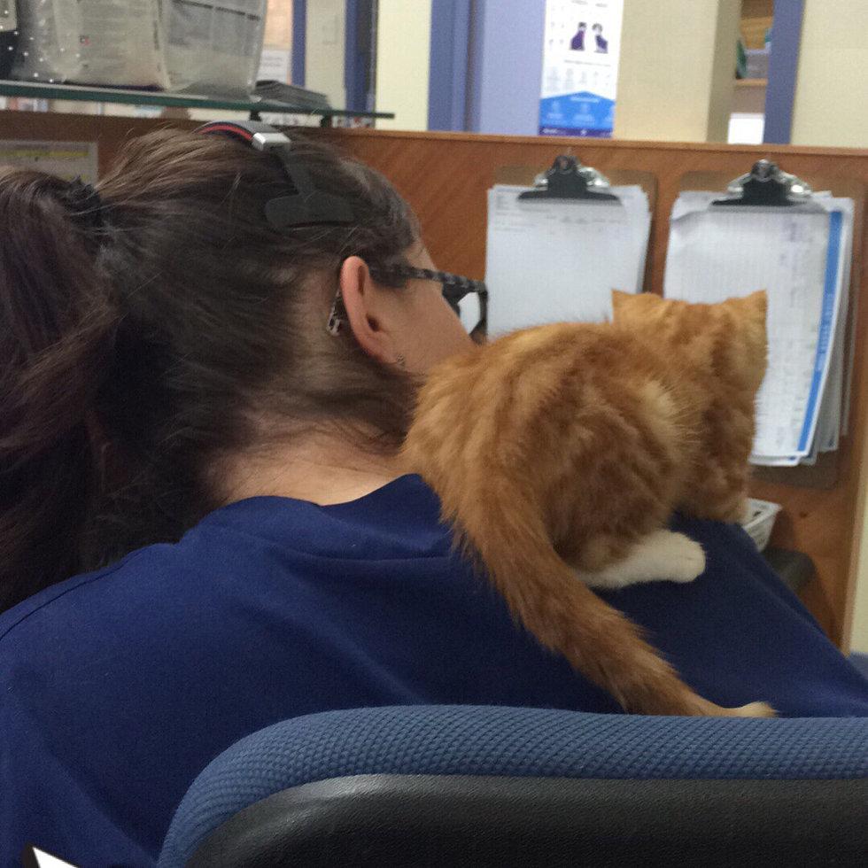 кот сидит на плече
