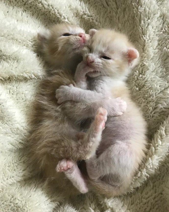 """""""Они были там, откуда не возвращаются..."""" Ради спасения двух малышей полосатый кот стал кошкой!"""