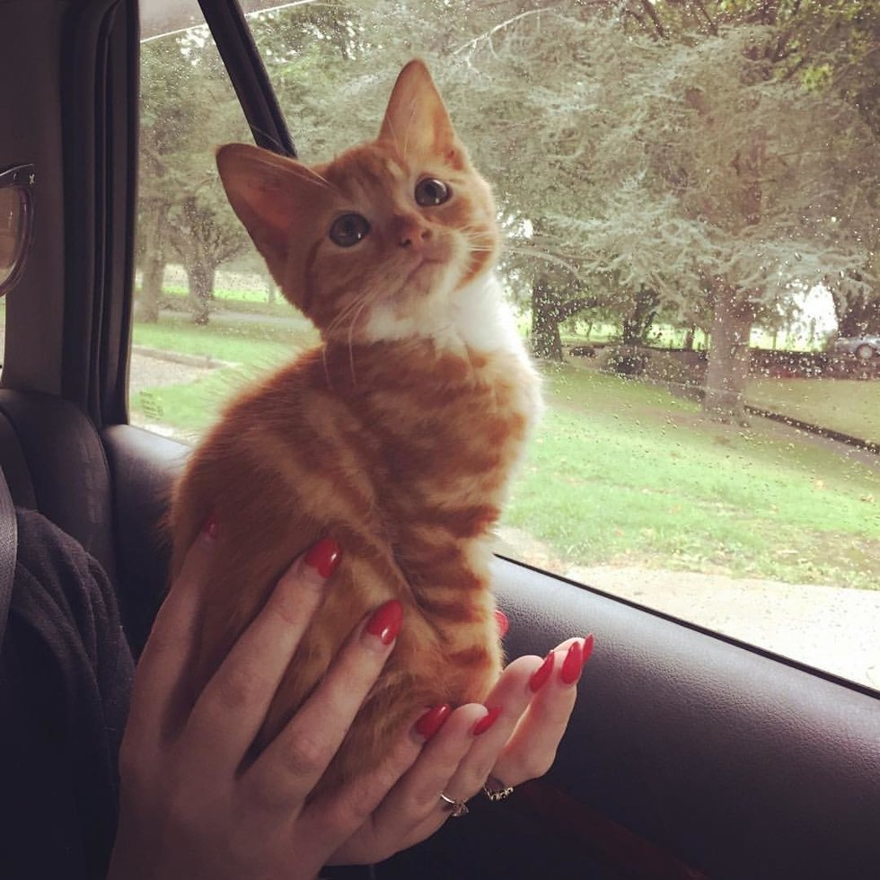 кот сидит на руках