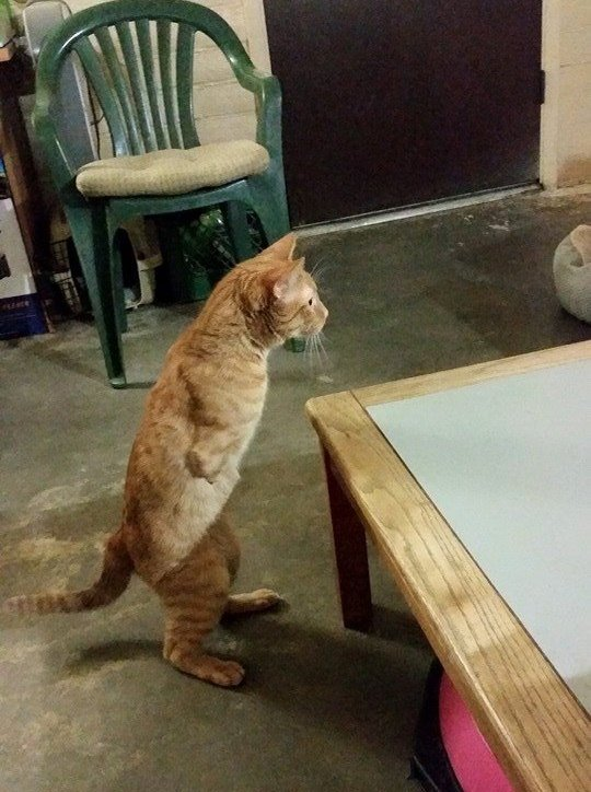 Вы никогда не видели такого котёнка! У него есть всего 1 коготь, чтобы хватать свою удачу... рис 8