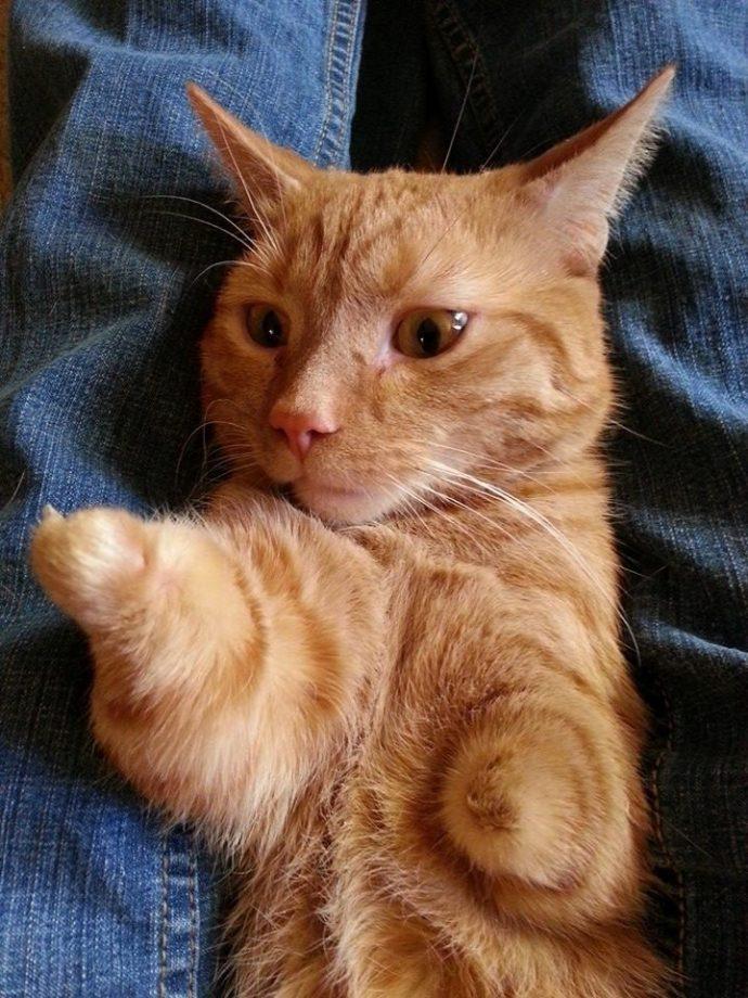 Вы никогда не видели такого котёнка! У него есть всего 1 коготь, чтобы хватать свою удачу... рис 2