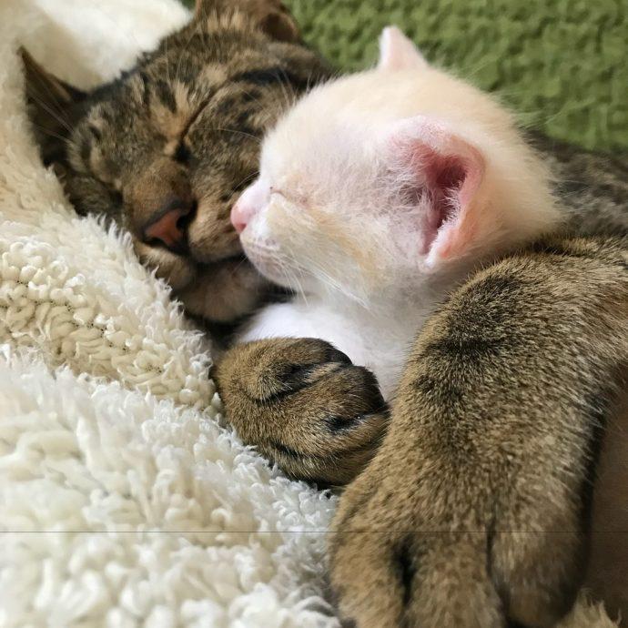 """""""Они были там, откуда не возвращаются..."""" Ради спасения двух малышей полосатый кот стал кошкой! рис 11"""