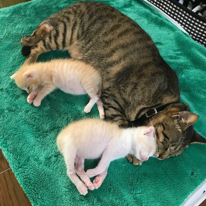 """""""Они были там, откуда не возвращаются..."""" Ради спасения двух малышей полосатый кот стал кошкой! рис 4"""