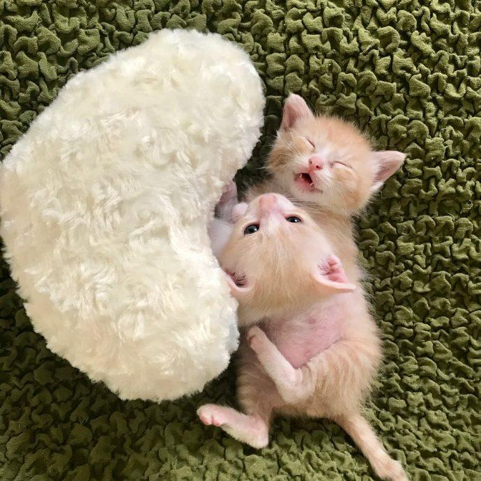 """""""Они были там, откуда не возвращаются..."""" Ради спасения двух малышей полосатый кот стал кошкой! рис 10"""