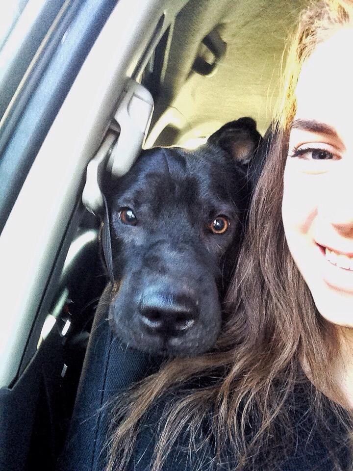 девушка и собака рис 3