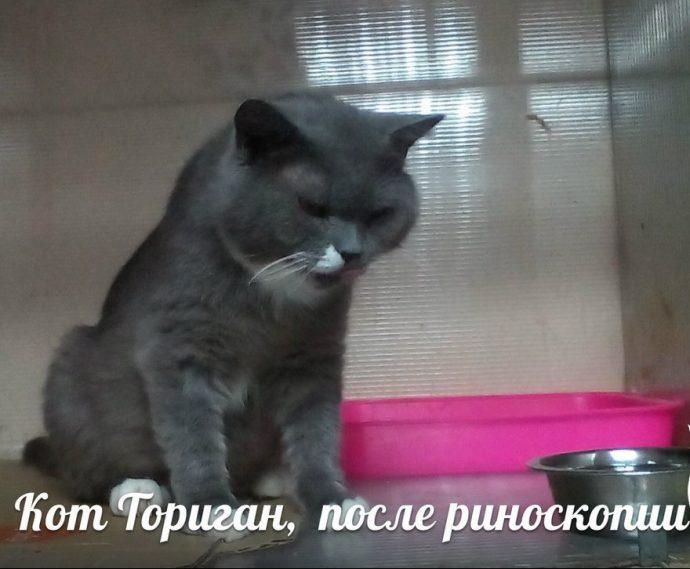 """""""Усыплю его, сам виноват!"""" Хозяин пустил кота к собакам и возмущается, что раны не заживают... рис 6"""