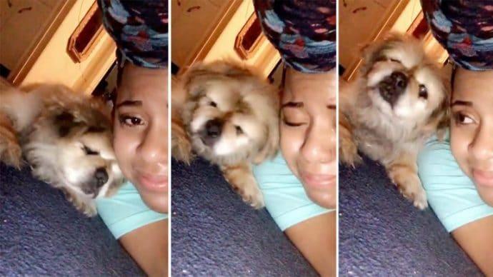 Девочка решила усыпить пекинеса и сняла видео прощания... Но пёс прямо в кадре сделал то, что спасло ему жизнь! рис 4