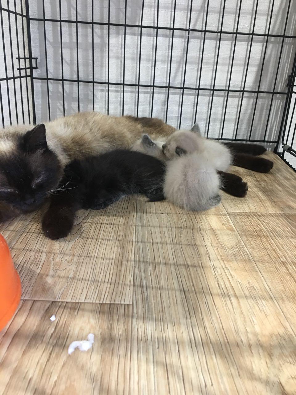 На дачах выбросили кошку с котятами... Кто не равнодушен к чужой беде, отзовитесь!