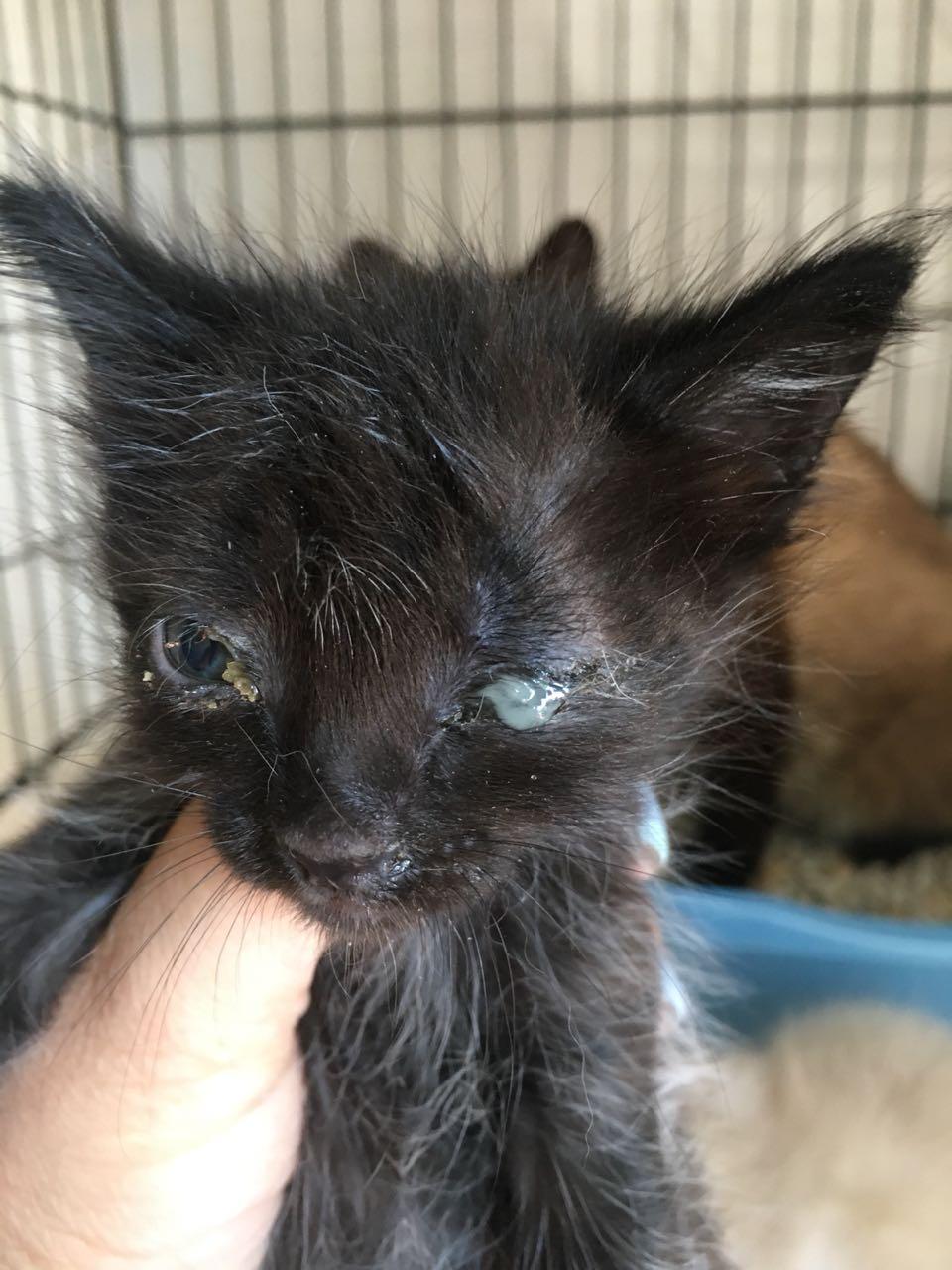 На дачах выбросили кошку с котятами... Кто не равнодушен к чужой беде, отзовитесь! рис 2