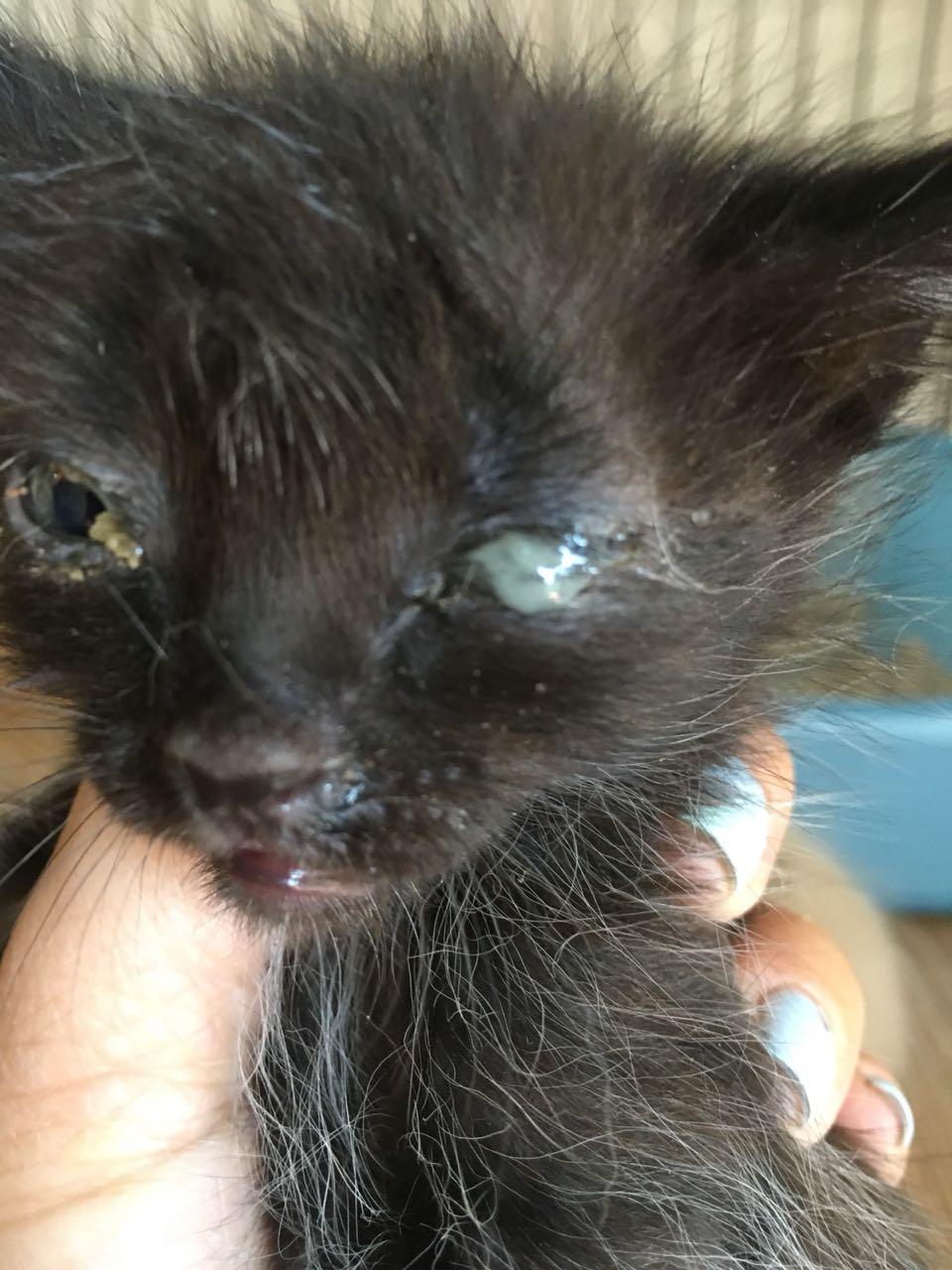 На дачах выбросили кошку с котятами... Кто не равнодушен к чужой беде, отзовитесь! рис 3