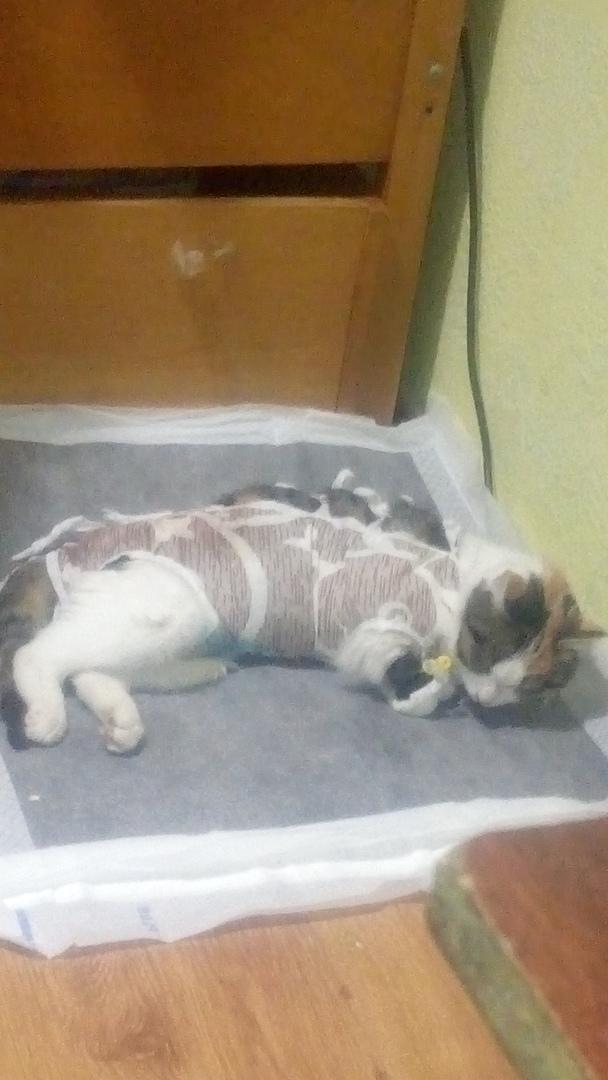лечение кошки