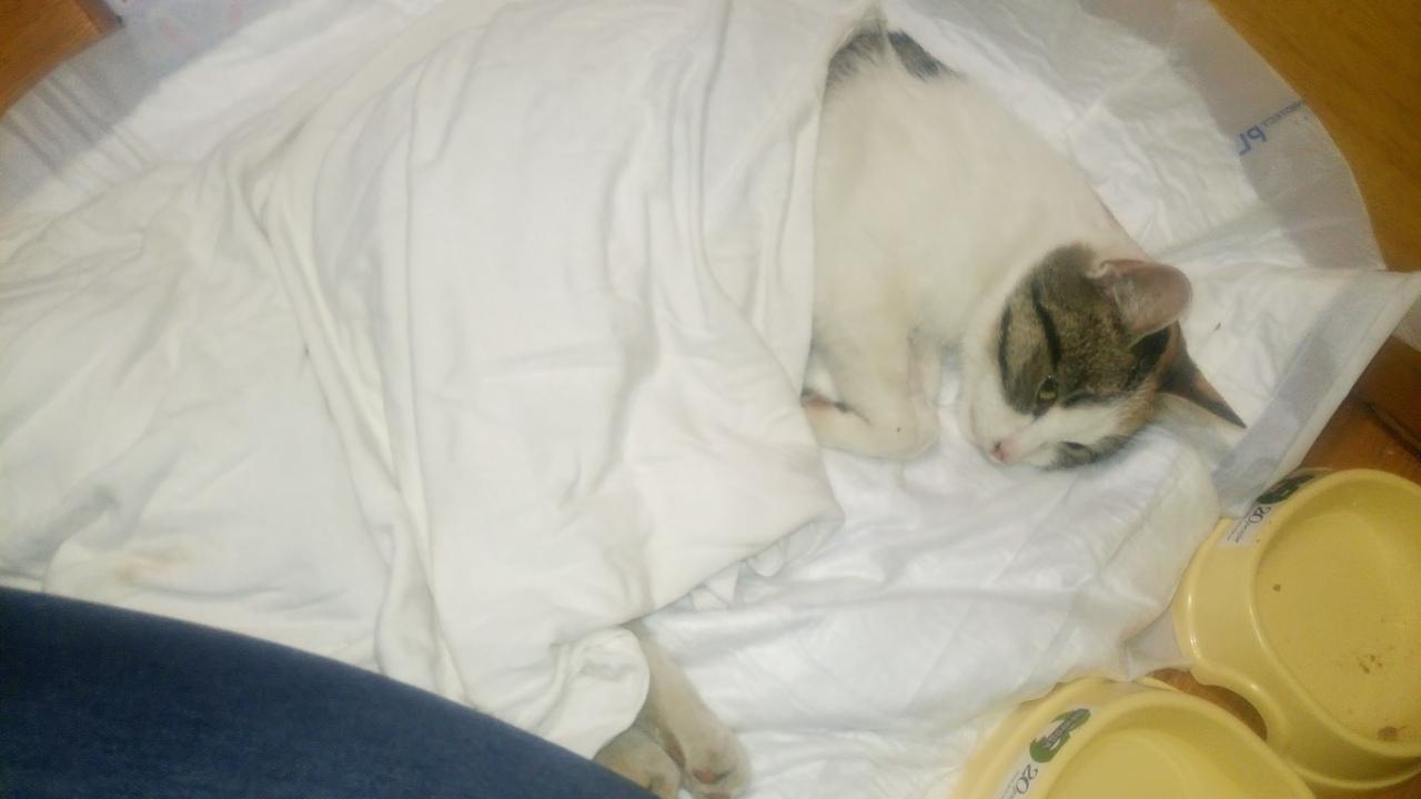 кошка-инвалид