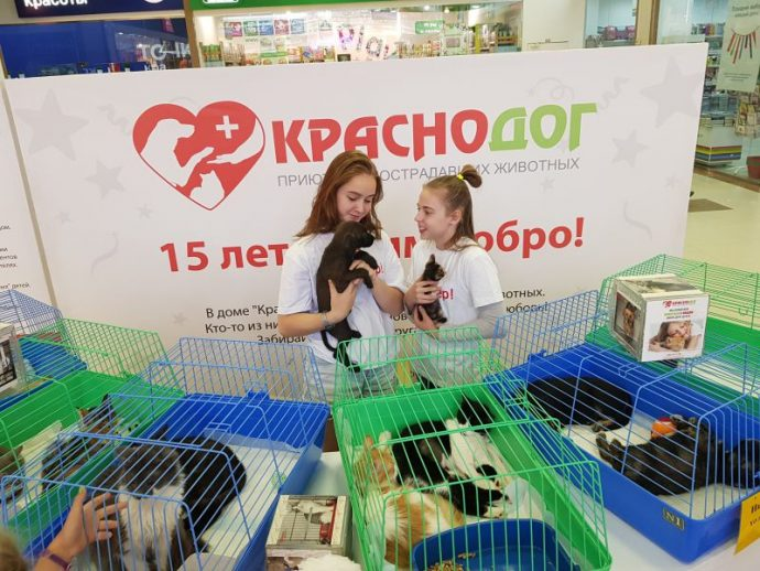 Призвание помогать: волонтёр Виктория – лучший друг собачек из приюта! рис 6