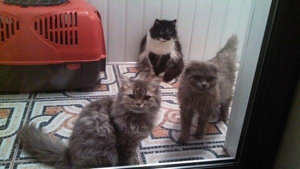 """""""Она замыкала кошек в мультиварке..."""" Строптивая Белладонна: 3 предательства и 1 любовь! рис 3"""