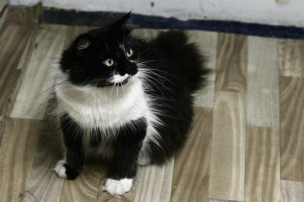 """""""Она замыкала кошек в мультиварке..."""" Строптивая Белладонна: 3 предательства и 1 любовь! рис 4"""