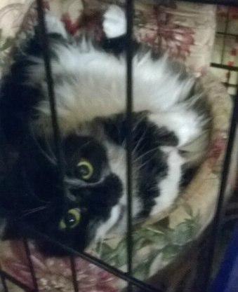 """""""Она замыкала кошек в мультиварке..."""" Строптивая Белладонна: 3 предательства и 1 любовь! рис 2"""