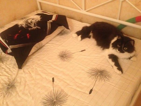 """""""Она замыкала кошек в мультиварке..."""" Строптивая Белладонна: 3 предательства и 1 любовь!"""