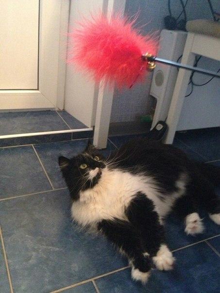 """""""Она замыкала кошек в мультиварке..."""" Строптивая Белладонна: 3 предательства и 1 любовь! рис 6"""