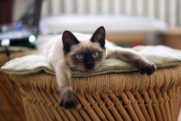 cat-882049_1280