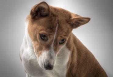 dog-601216_1280