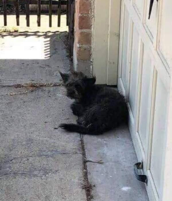 dog-waiting-garage-door-owners-never-come-01