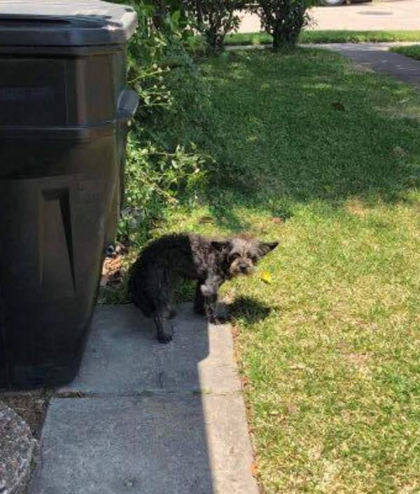dog-waiting-garage-door-owners-never-come-02