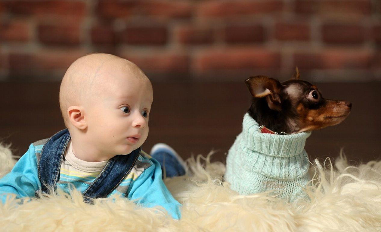 тойтерьер и мальчик