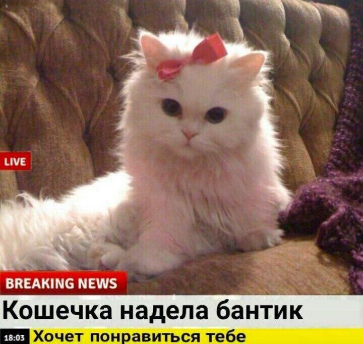 Гламурные кошечки: безлимитный абонемент в салон красоты на дому!