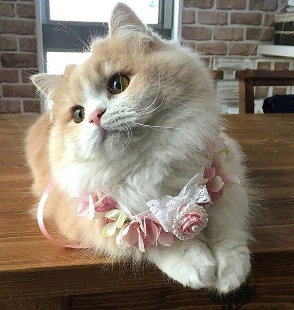 Гламурные кошечки: безлимитный абонемент в салон красоты на дому! рис 2
