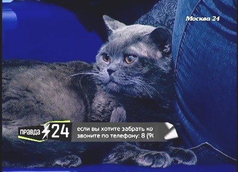 Под дождём в коробке свернулась чья-то тень... А через пару месяцев породистый кот стал звездой TV! рис 4