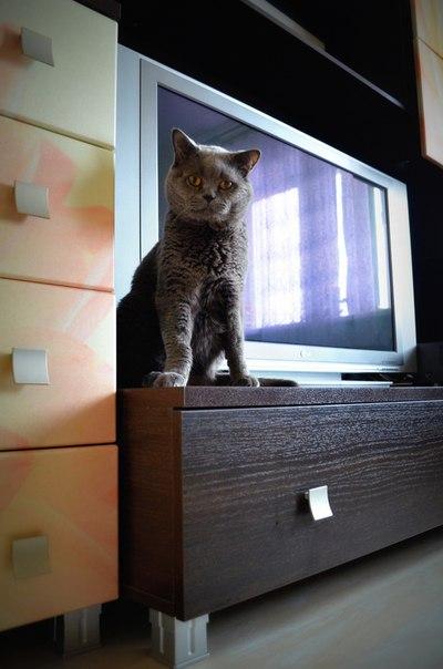 Под дождём в коробке свернулась чья-то тень... А через пару месяцев породистый кот стал звездой TV! рис 5