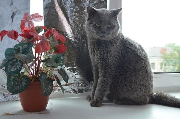 Под дождём в коробке свернулась чья-то тень... А через пару месяцев породистый кот стал звездой TV! рис 6