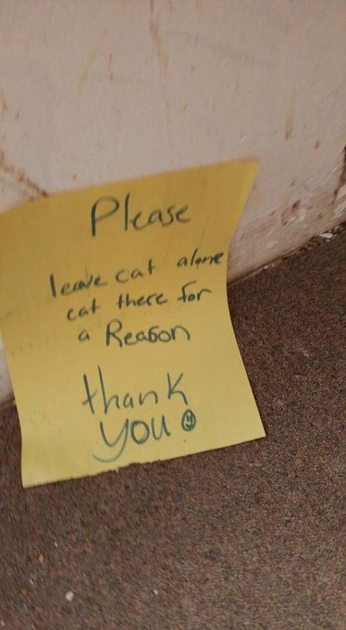 """""""Кота - не спасать! Он сидит тут по важной причине..."""" Но парень наступил на записку и обнял бедного зверя! рис 3"""