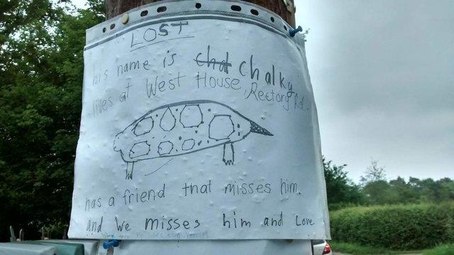"""""""Это сделал ребёнок!"""" Волонтер везла потеряшку в приют, как вдруг увидела на столбе странный плакат... рис 3"""