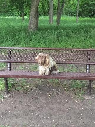 На скамейке лежал чумазый коврик... Никто не знал, что это - щенок, которого ждут и любят!