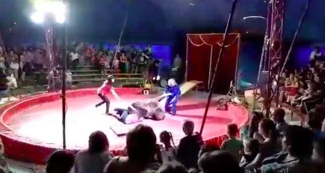 """""""Он даже спрятаться не мог!"""" Питерский цирк приехал в село и показал такое """"шоу"""", что зрители с криками разбежались! рис 5"""