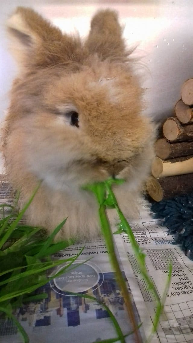 """""""Их кролик почти превратился... в мамонта!"""" Пол - не понятен, зубы - по пояс... Что происходит?! рис 4"""