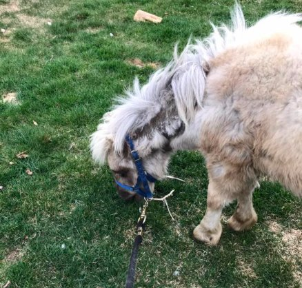 7 лошадей обнаружили на болоте, за колючей проволокой... Но главный узник был заперт в трейлере! рис 7