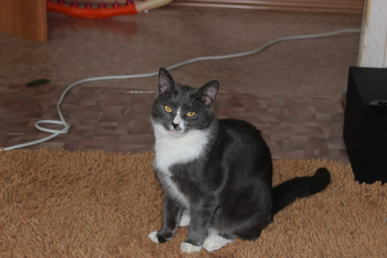 кошка рис 2