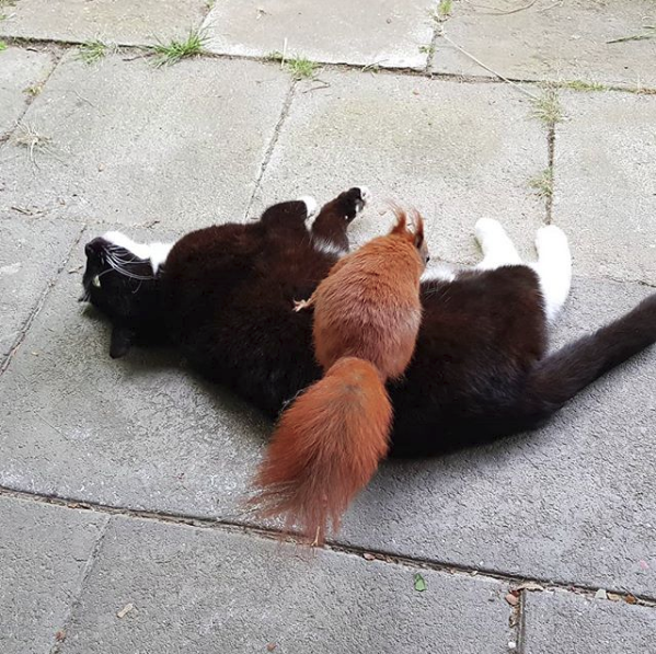 Кошка нежно прижимала к себе раненого бельчонка... История 3-х усатых друзей, полная счастливой любви! рис 9