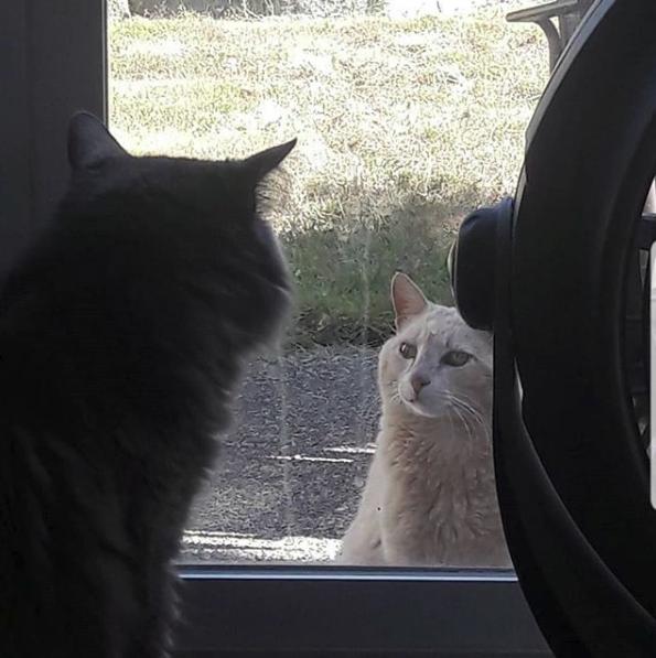 """""""Я - магнит для бездомных кошек!"""" Девушка на новоселье получила сюрприз от старых хозяев... рис 9"""
