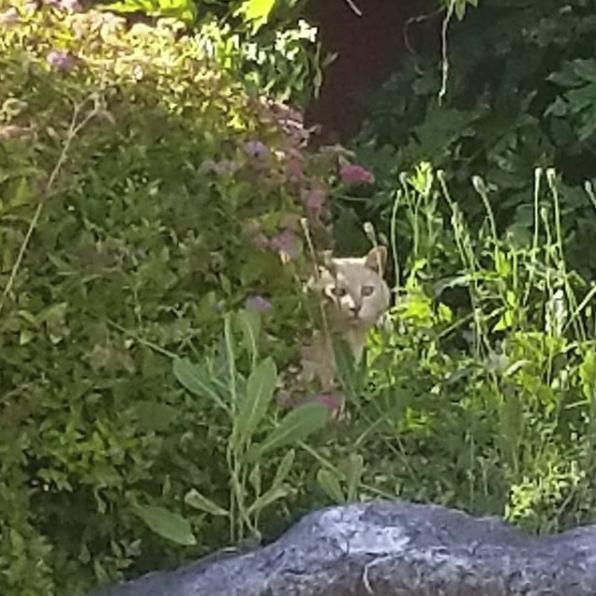 """""""Я - магнит для бездомных кошек!"""" Девушка на новоселье получила сюрприз от старых хозяев..."""