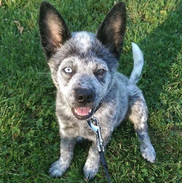 Купили щенка в зоомагазине - и удивились! Малыш Лось вырос необыкновенным и смешным...)