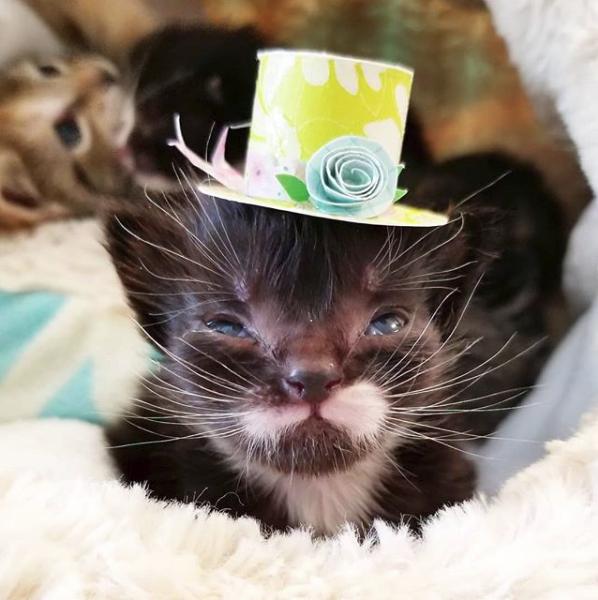 """""""Он размером с кекс!"""" История о котёнке с мордочкой-бантиком, который не растёт рис 7"""