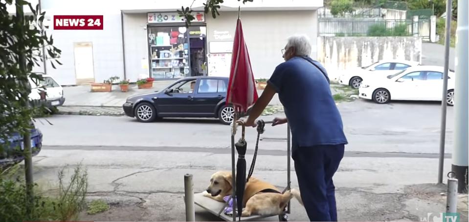 Человечность! Мужчина катает старую собаку на тележке, помогая ей просто жить... рис 3