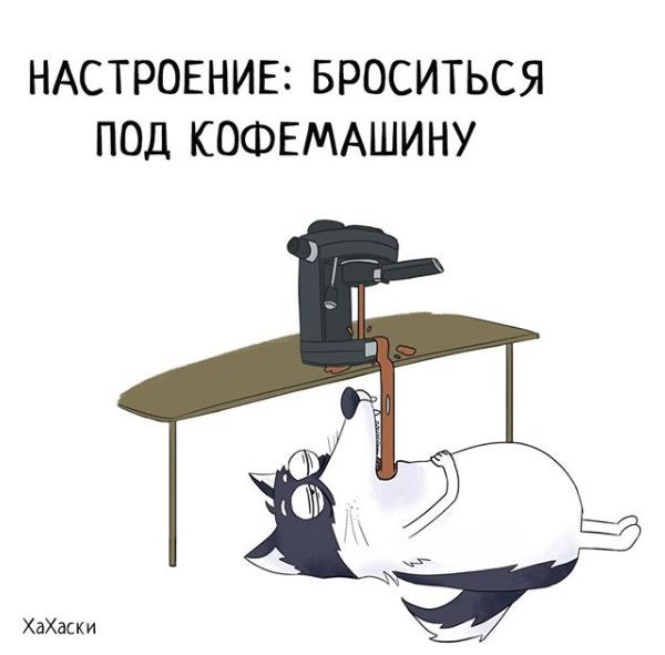 """""""Хаски - это ты!"""" 100% юмора, где каждый узнает свою жизнь. + История о настоящем хаски и котятах! рис 8"""