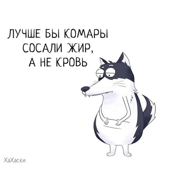 """""""Хаски - это ты!"""" 100% юмора, где каждый узнает свою жизнь. + История о настоящем хаски и котятах! рис 11"""