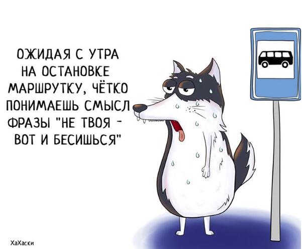 """""""Хаски - это ты!"""" 100% юмора, где каждый узнает свою жизнь. + История о настоящем хаски и котятах! рис 14"""